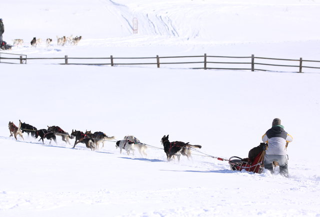 Dog sledding with All Season Adventures