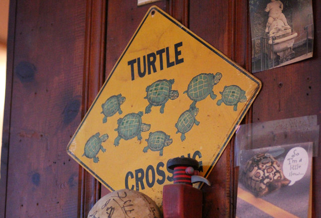 Turtle racing at Big Joe's in Lincoln Square