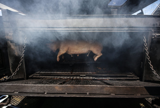 hog smoking