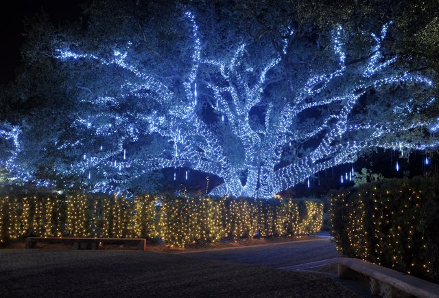 Things to do in new orleans this december for What to do on new orleans