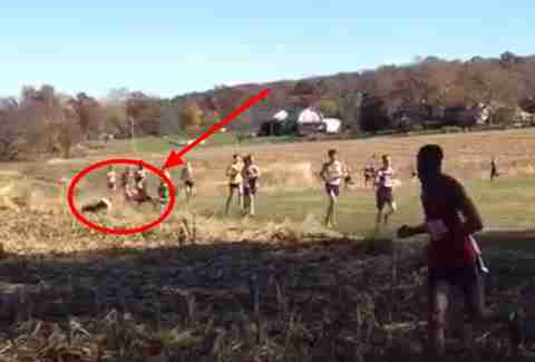 Deer crashes college cross-country race, topples runner