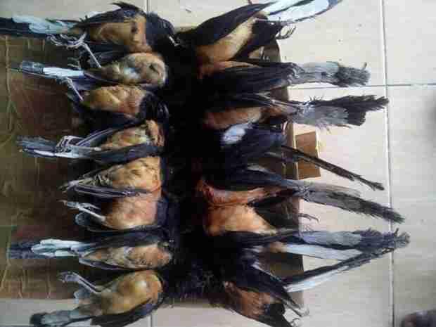 La vida de los pájaros   Canciones