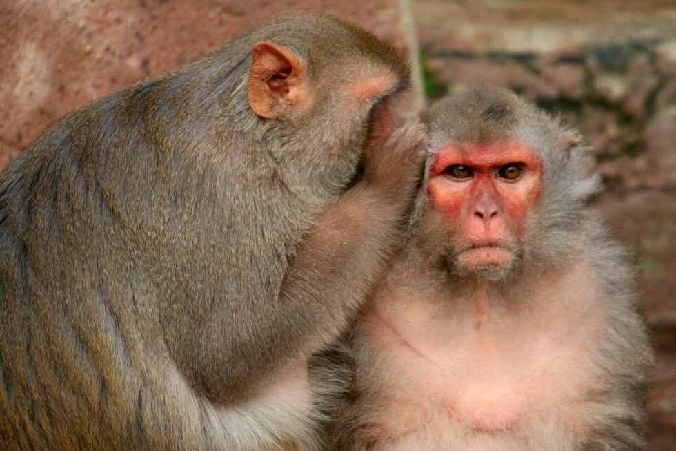 Animal Abuse Monkeys  YouTube