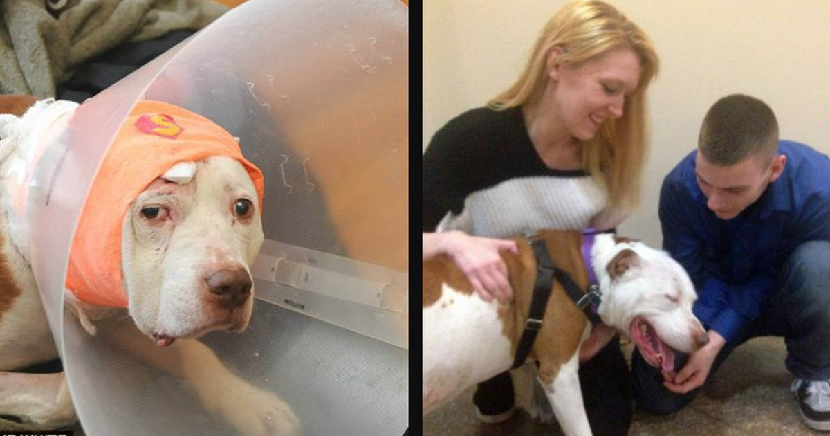 Naughty deaf dog who couldnt be trained is finally
