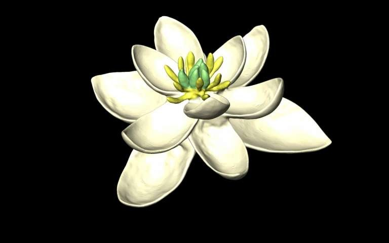 The earliest flower ancestor had both male and female parts
