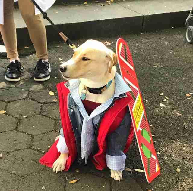 marty dog high fives nyc marathon