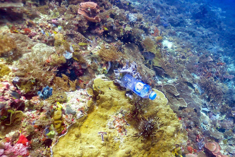 Coral reefs inundated with billions of pieces of plastic