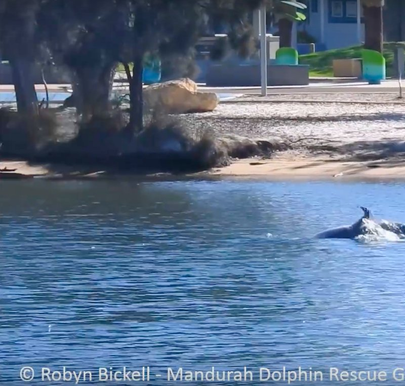 Wild Dolphin Caught On Camera Giving Birth