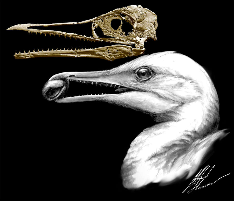 Fossil discovery shows ancient creature was half bird, half dinosaur