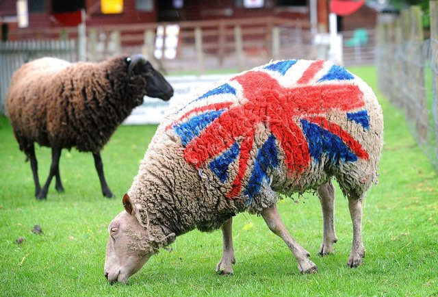 Danny Boyle Has Contracted ~70 Sheep for Opening Ceremonies