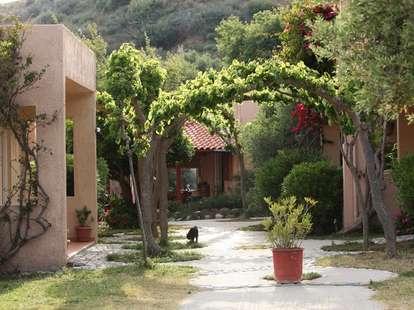 Youth Hostel trees