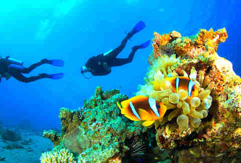 two people scuba diving in honduras