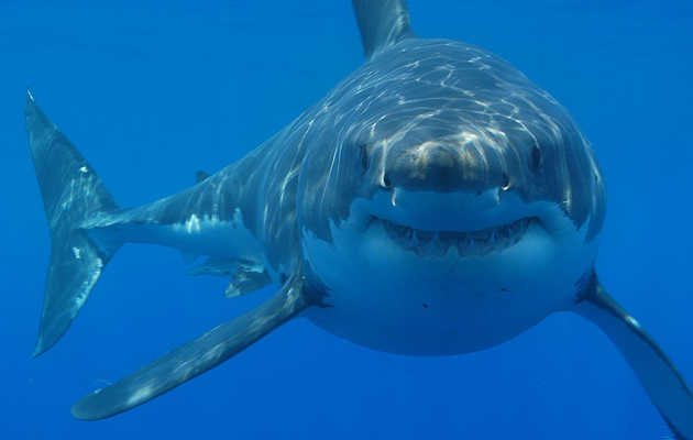 Shark cage-diving experiences guaranteed to scare the crap out of you