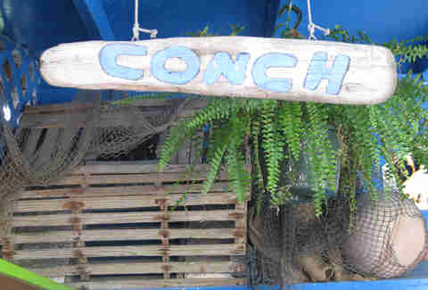 Conch shack