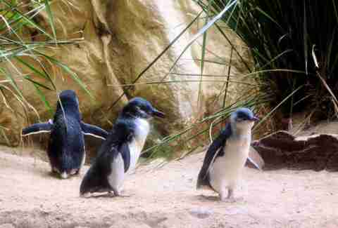 Penguins at Sea World