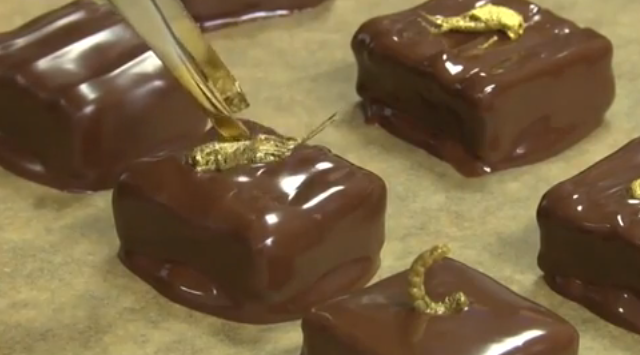 The French are making gold cricket chocolates now