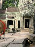 Cow in Cambodia