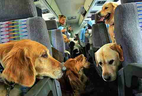dogs on plane