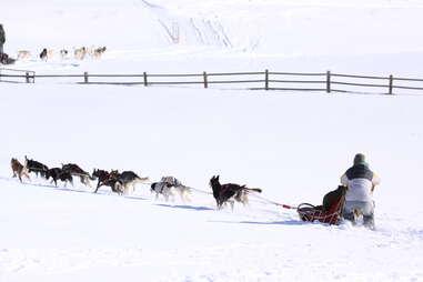 Dog sledding with All Season Adventures