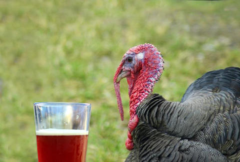 Turkey with a beer