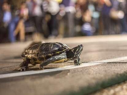 brennan's turtle races