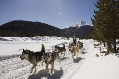 Good Times dog sledding, Breckenridge, Colorado