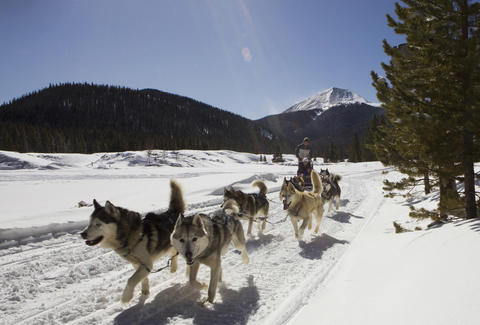 Good Times dog sledding, Breckenridge, Colorado