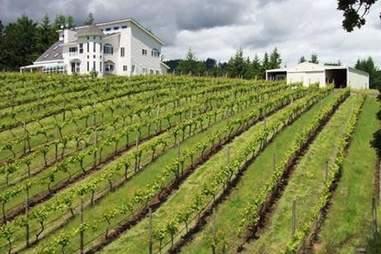 White house, vineyard