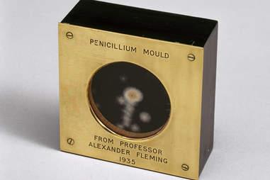 penicillin mold
