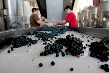 Fresno State Winery
