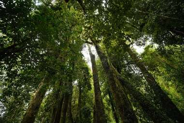 Huilo Huilo forest