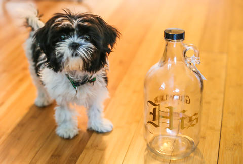 growler dog