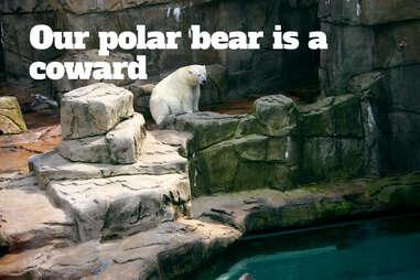 lincoln park zoo CHI