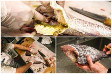 removing fish organs