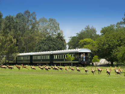 Rovos train with animals