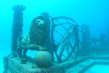 underwater lions
