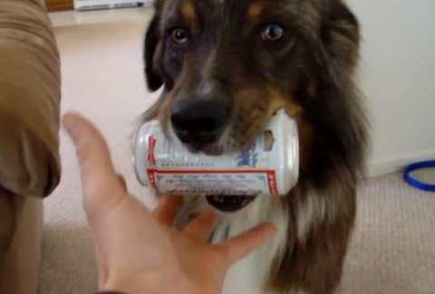 Dog fetches beer