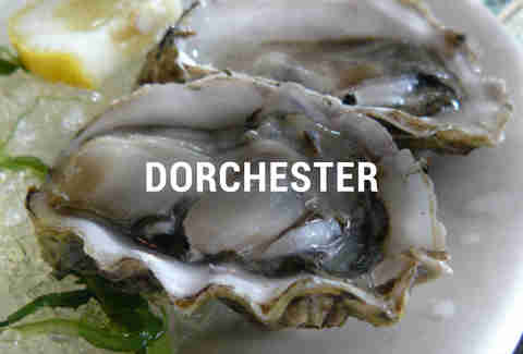 Dorchester Oyster Happy Hours BOS