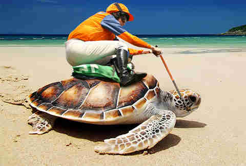 Kentucky Island's sea turtle derby