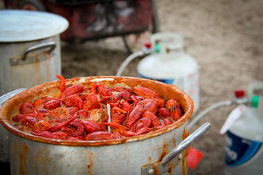 crawfish in pot crawfishes craw fish seafood boil spicy louisiana how to throw a crawfish boil