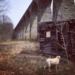 dog by shack