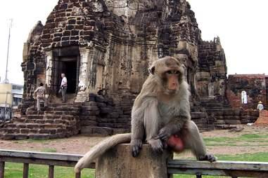 monkey temple balls