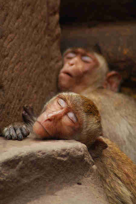 sleepy monkeys