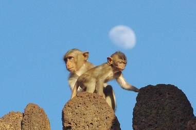 baby monkey on temple