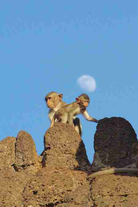 baby monkey on temple