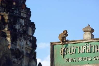 monkey on sign