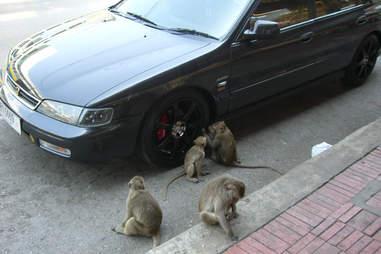monkey car