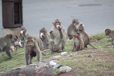 monkey picnic