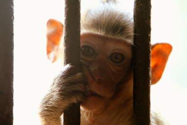 monkey jail