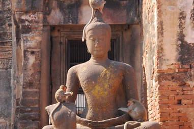 monkeys with buddha